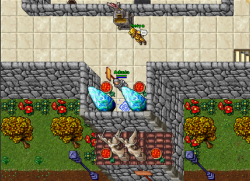 Free Tibia Coins
